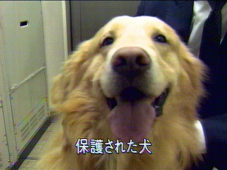 20060416chiktetsuinu