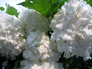 20060611flower3
