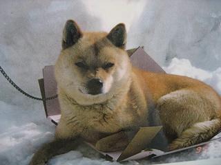20060905dog