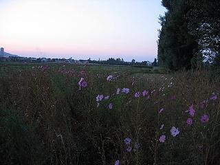 20061025aki4
