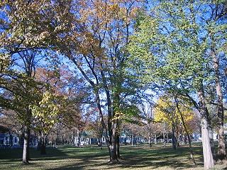 20061110trees1