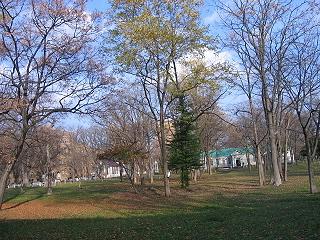 20061110trees2