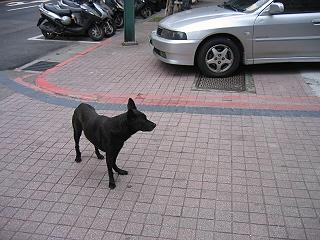 20070103dog2