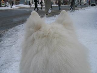 20070209dog3