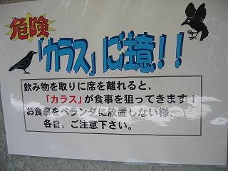20070618karasu1
