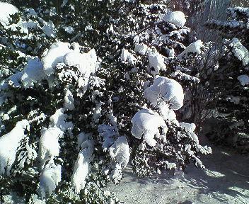 雪の朝(あした)