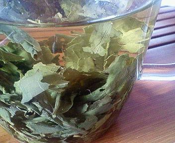 病気のときは雑種茶