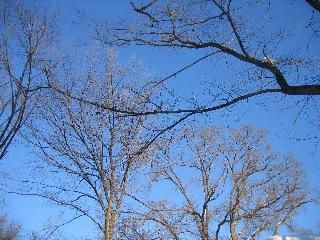 20080209tree1