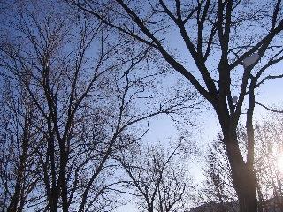 20080209tree2
