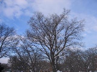20080218tree