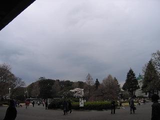 20080330sakura4_2