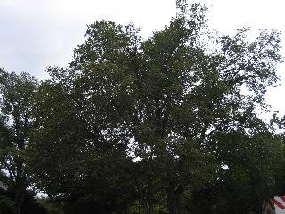 20080820
