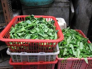 20090328hongkong2