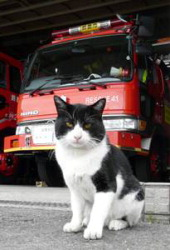 20091119kuro_the_cat_fire_2