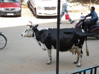 20100324india1