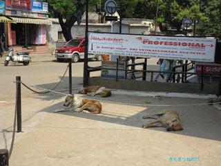 20100324india3