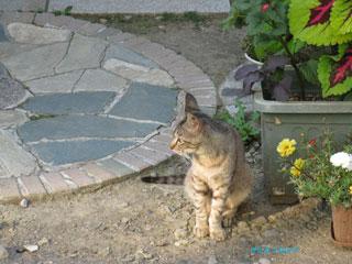 20100820cat2