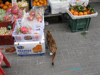 20110115hongkong4
