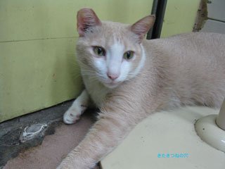 20120913hongkong3