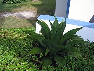 20060226plant1
