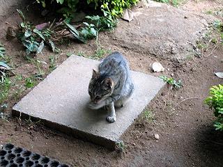20060301cat3